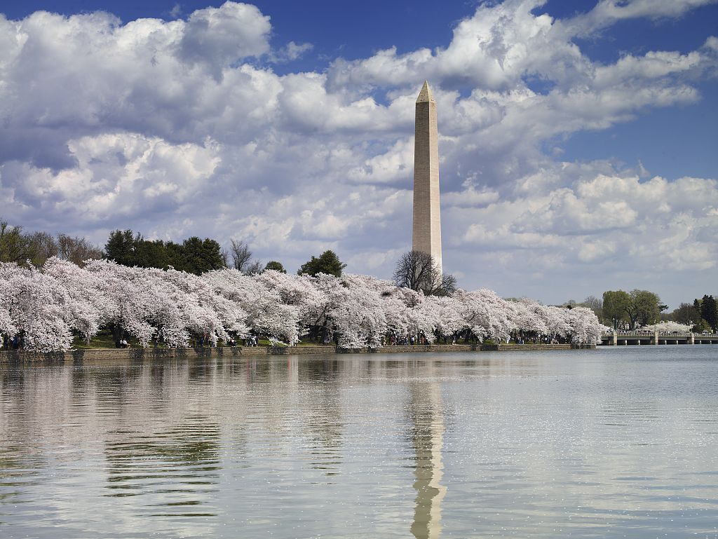 The Washington Monument, Washington, D.C,, surrounded by blooming cherry trees. Photo by Carol Highsmith, April 2007/Courtesy of the Library of Congress